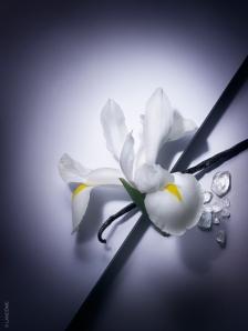 Iris Pallida, magnolia, vanille, patchouli et fève tonka... les plus beaux ingrédients infusent l'eau de toilette La Vie est belle (ph. Carter Smith pour Lancôme)