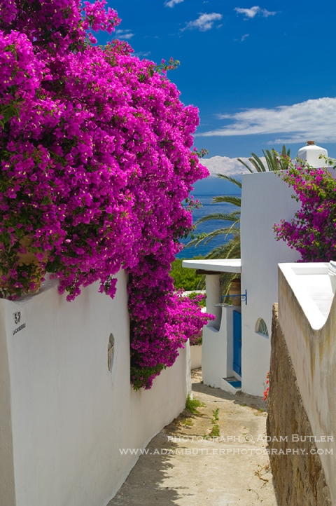 Une ruelle de Panarea fleurie de bougainvillées (ph. Adam Butler)